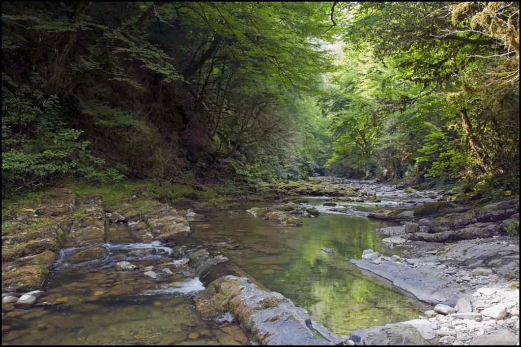 речка около самшитового водопада