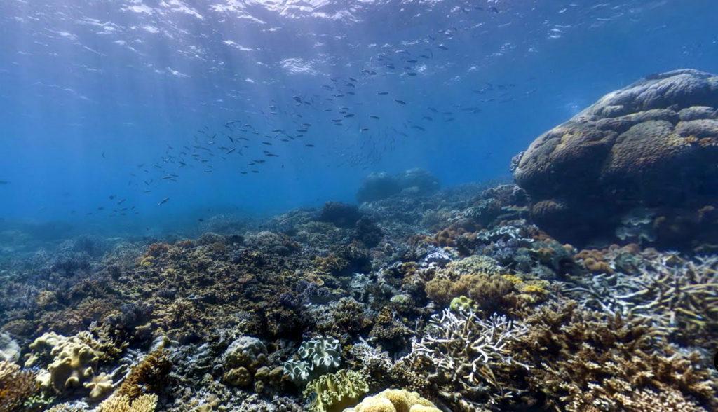 рифы коралловые фото