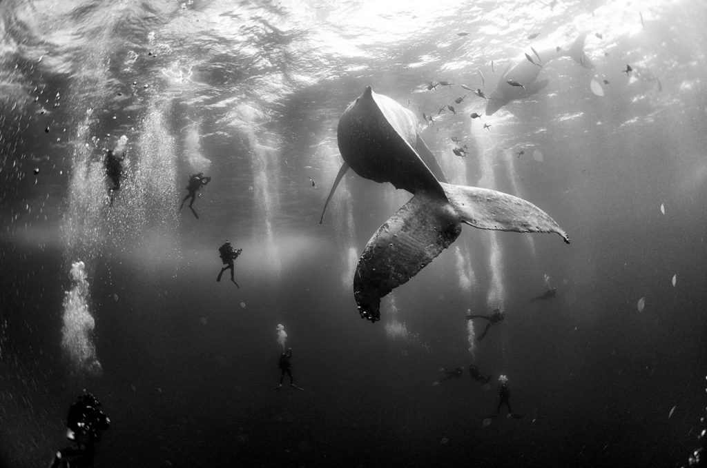 world-press-photo-whales