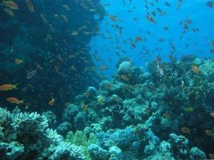 korallovyy-rif-polon-zhizni