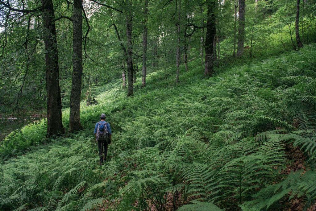 Дикий лес у тропы здоровья (Роза Хутор)