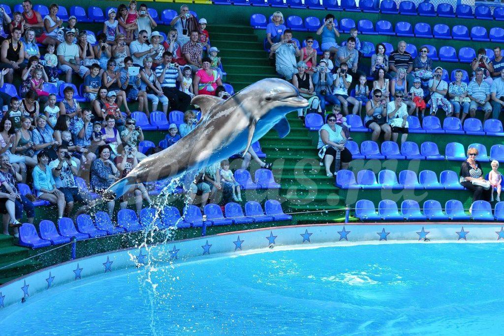 Дельфинарий Акватория в Адлере дельфины