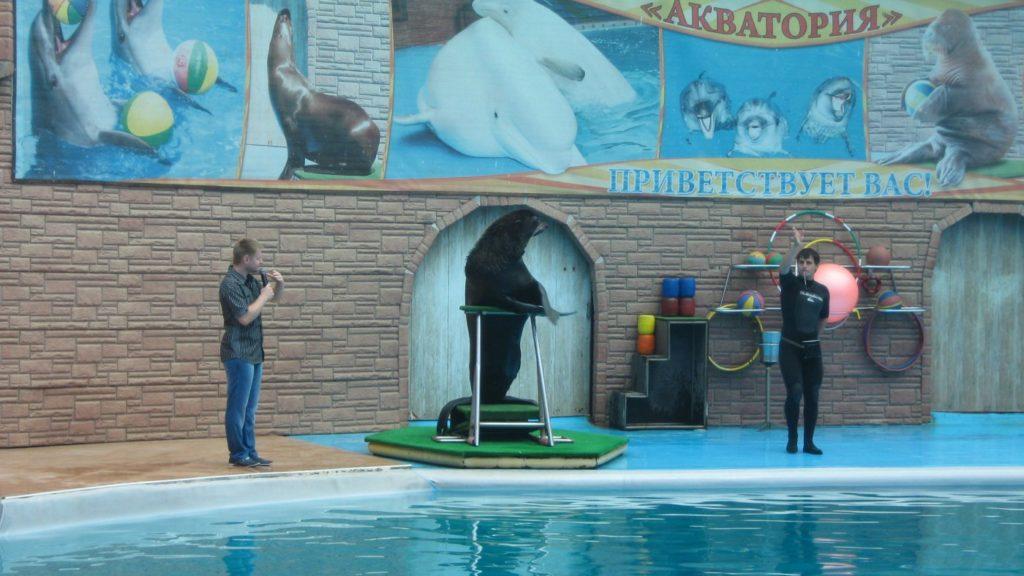 Дельфинарий Акватория в Адлере морской лев