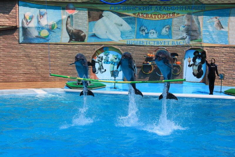 Дельфинарий Акватория в Адлере обитатели черного моря