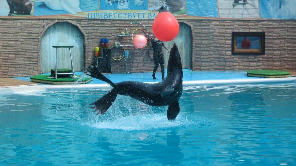 Дельфинарий Акватория в Адлере трюкачи