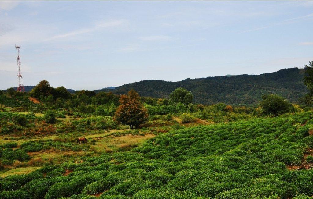 Калиновое озеро чайные плантации по дороге в хосте