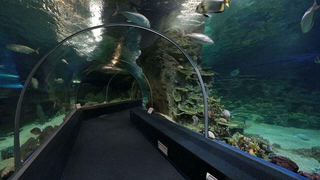 Океанариум в Адлере проход по тоннелю