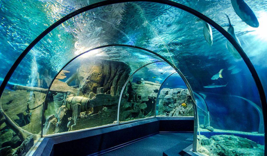 Океанариум в Адлере проход