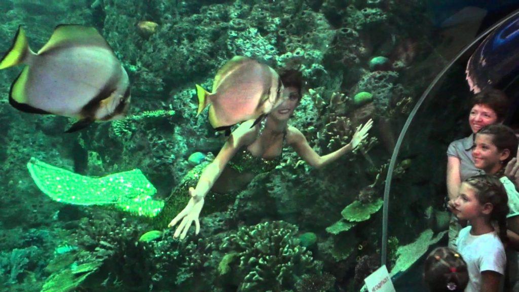 Океанариум в Адлере развлекательное шоу