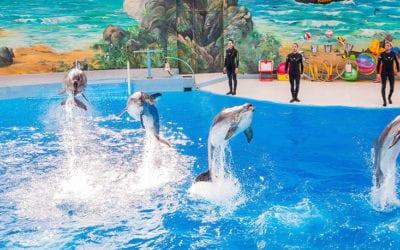 Дельфины сочи