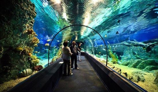 Сочинский Океанариум в Ривьере проход под водой