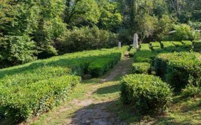 Дом музей кошманова Чайный рай
